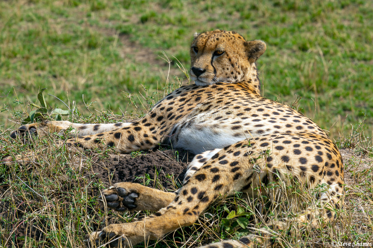 We came across a cheetah relaxing in the middle of the day.