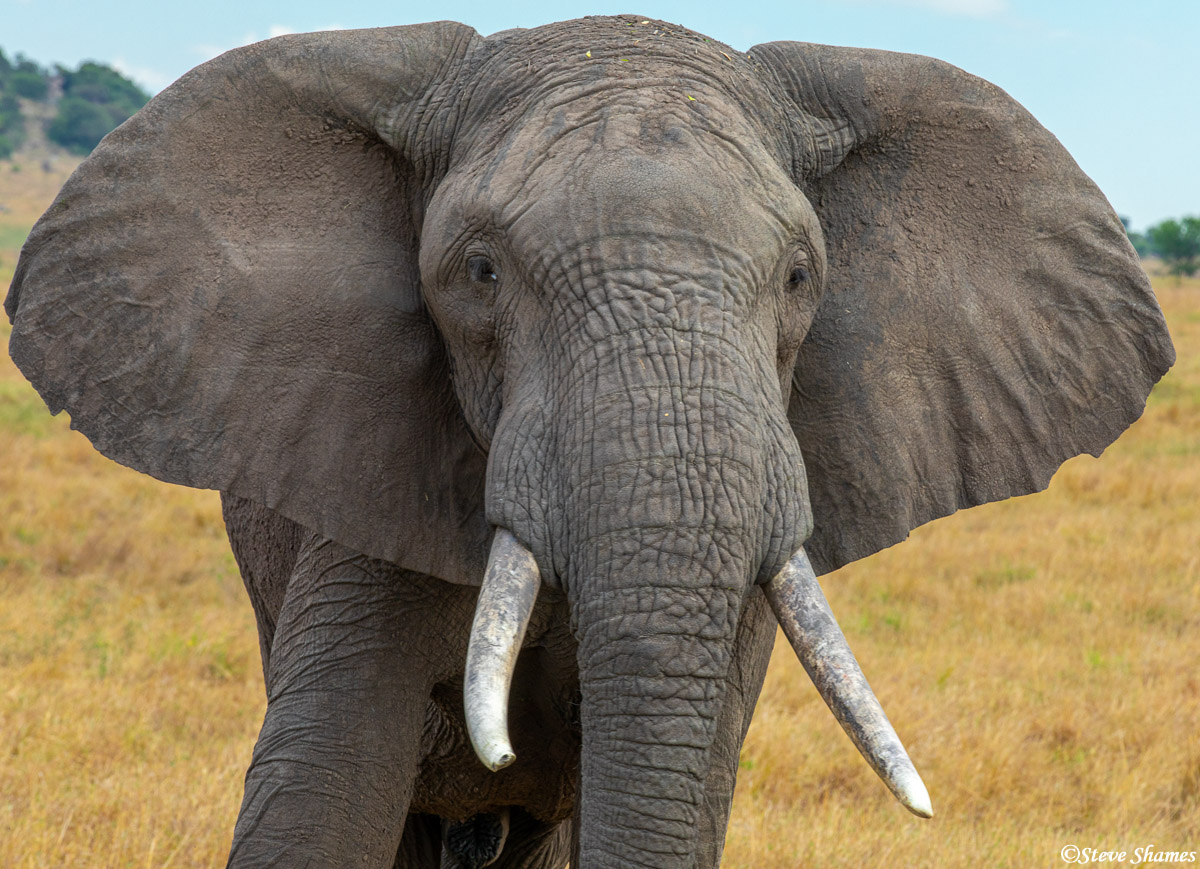 Close up portrait of a good looking elephant.