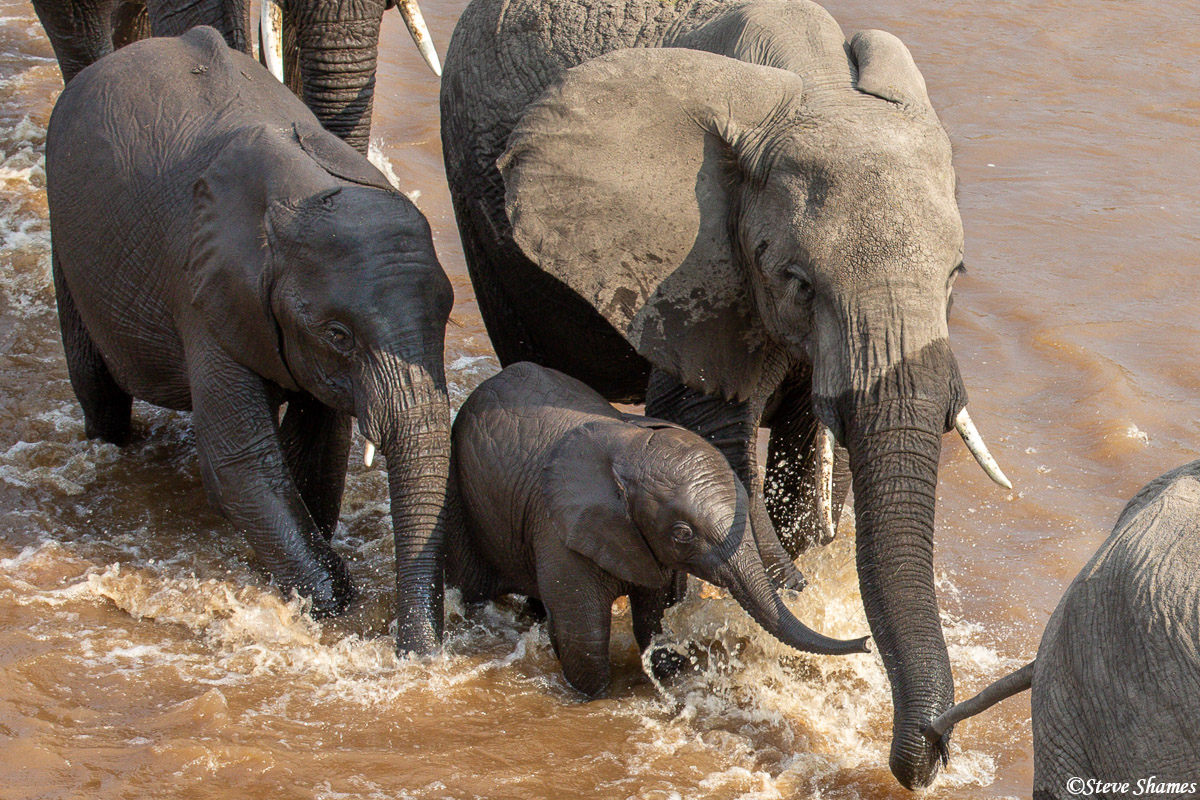 The older elephants crowd around the youngster and help it stay on its feet.