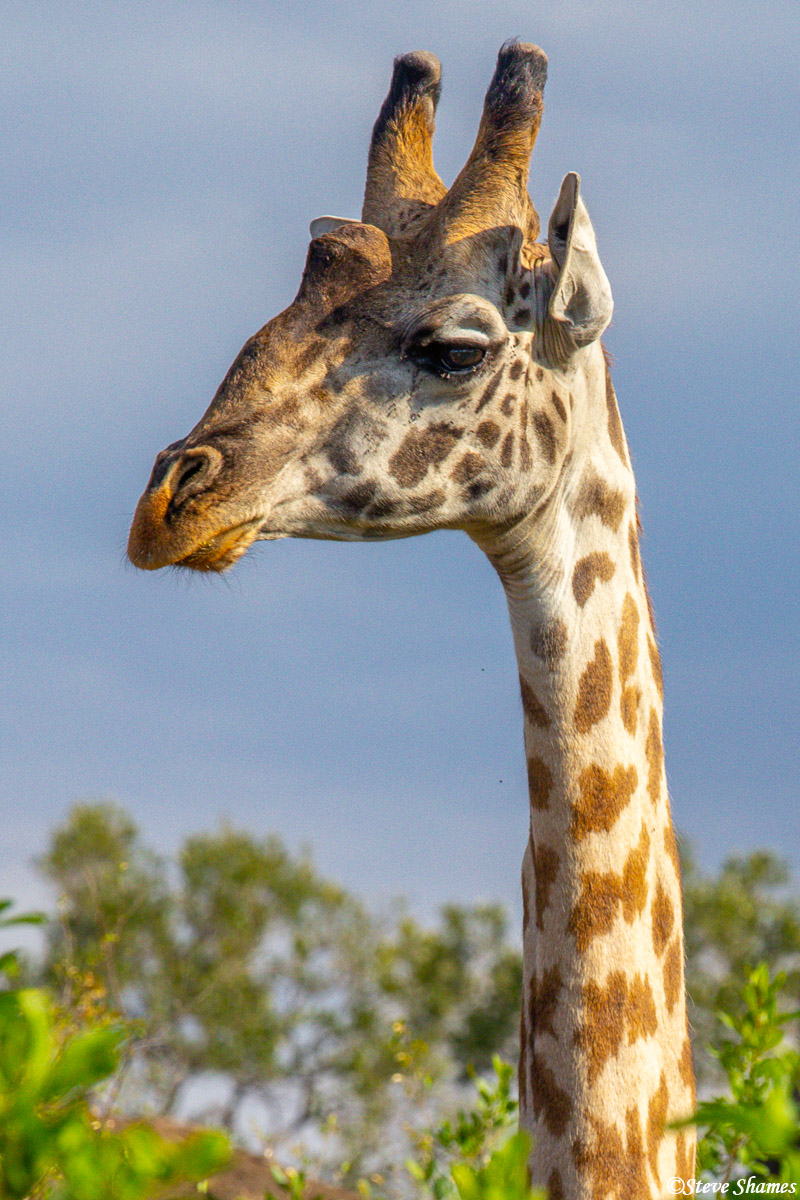 I like to zoom in and get close in portraits of giraffes.
