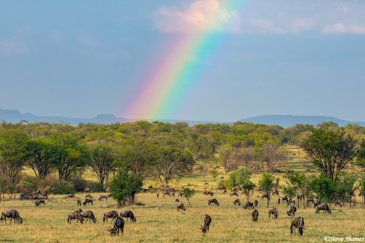 A rainbow over the Serengeti plains with the ubiquitous herd of wildebeest in front.