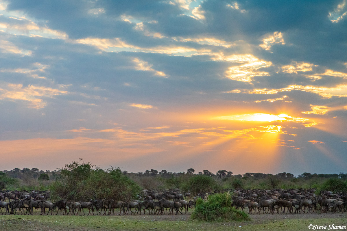 I thought this was a beautiful scene with the suns rays breaking through the clouds onto a herd of wildebeest.
