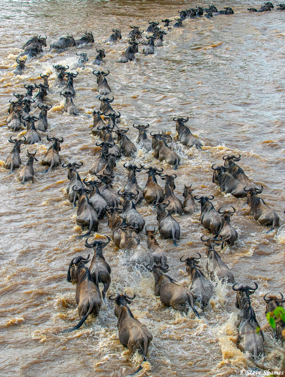 Pretty much every day, we would see wildebeests crossing the Mara River.