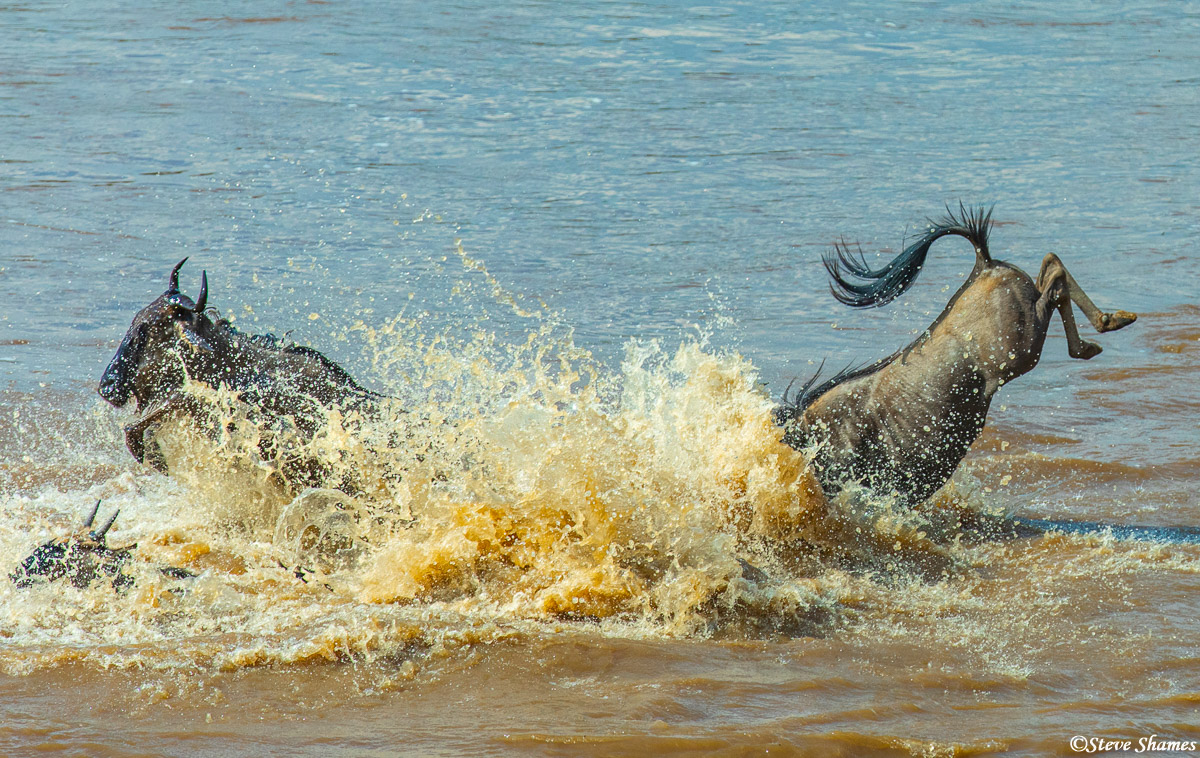 Splashing down in the Mara River! It always a hectic feeling when the wildebeest are crossing.