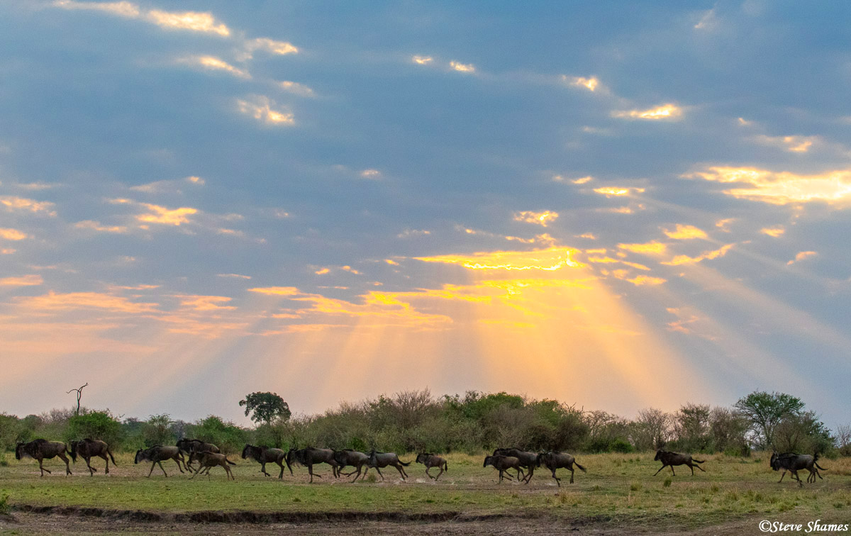 Wildebeest running - they do that a lot. I like the sun rays breaking through the clouds.