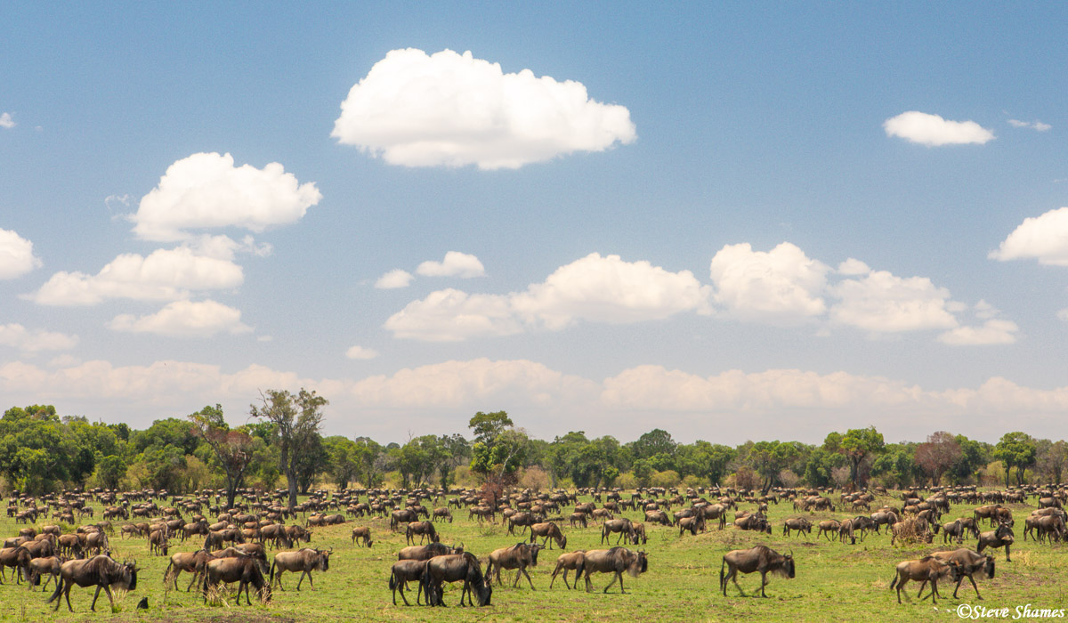 """Wildebeest everywhere! That's how it is in the Northern Serengeti when """"The Great Migration"""" is in full swing."""