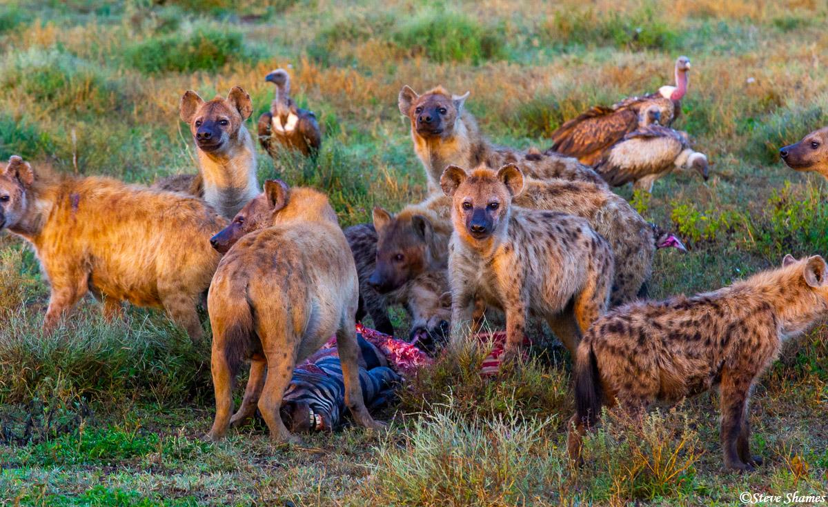 hyena kill, serengeti, national park, tanzania, scavenged, photo
