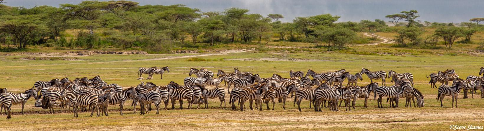 serengeti, national park, tanzania, zebra, panorama, photo