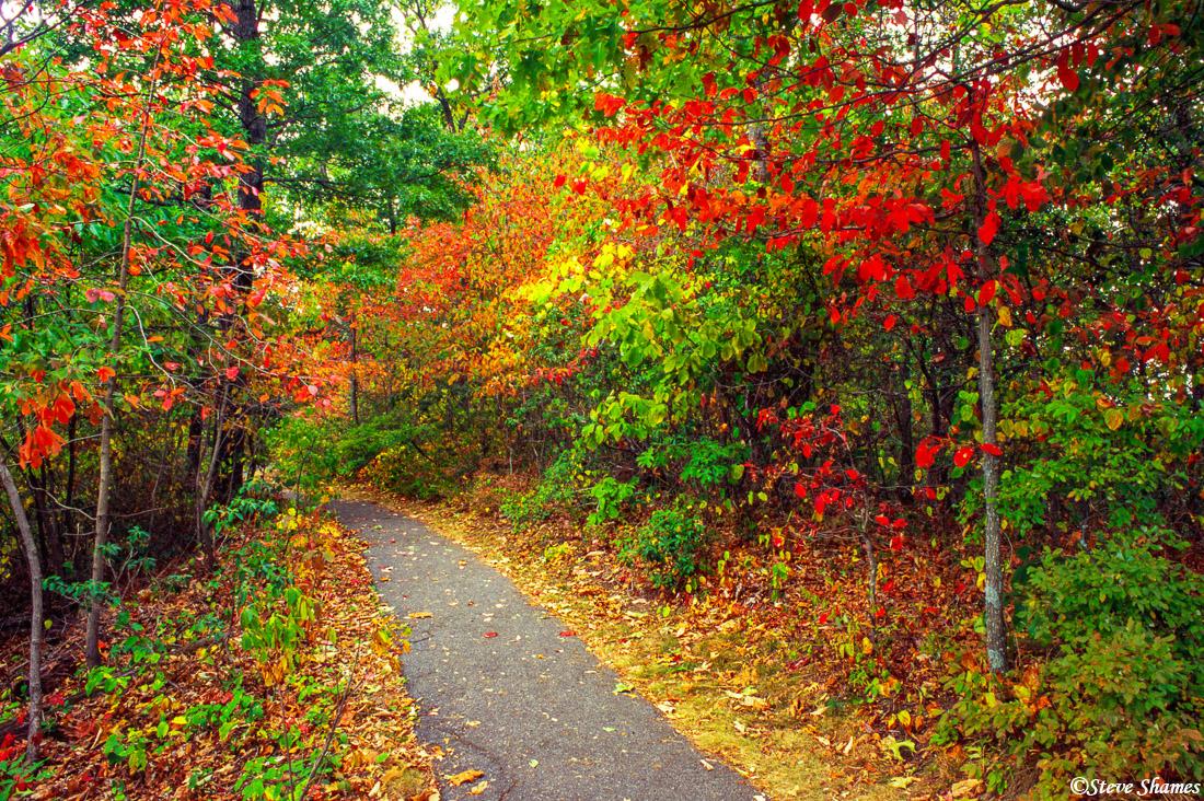 shenandoah fall colors, national park, virginia, photo
