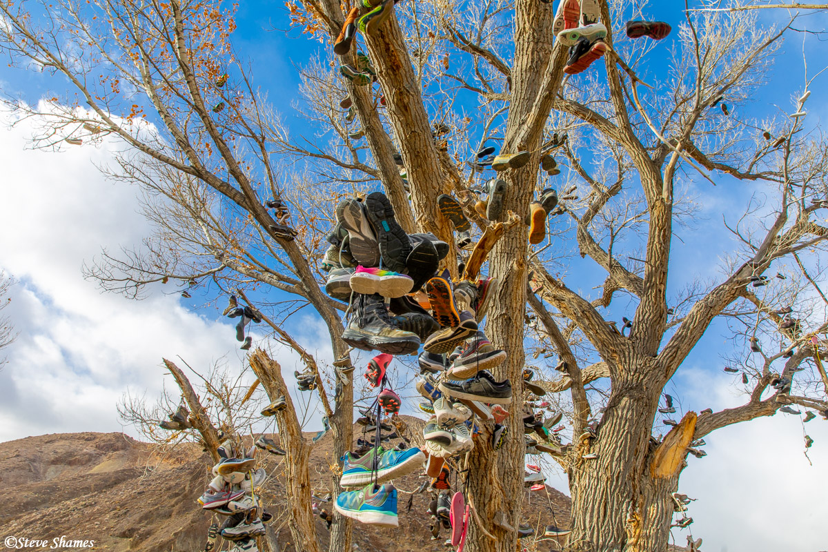This is a tree near Middlegate Nevada, where everybody likes to throw their old shoes on.