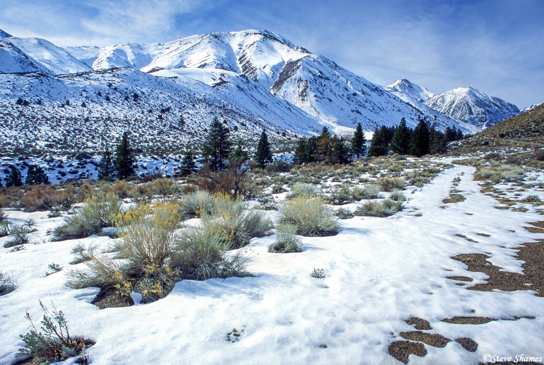 owens valley, big pine california, sierras, photo