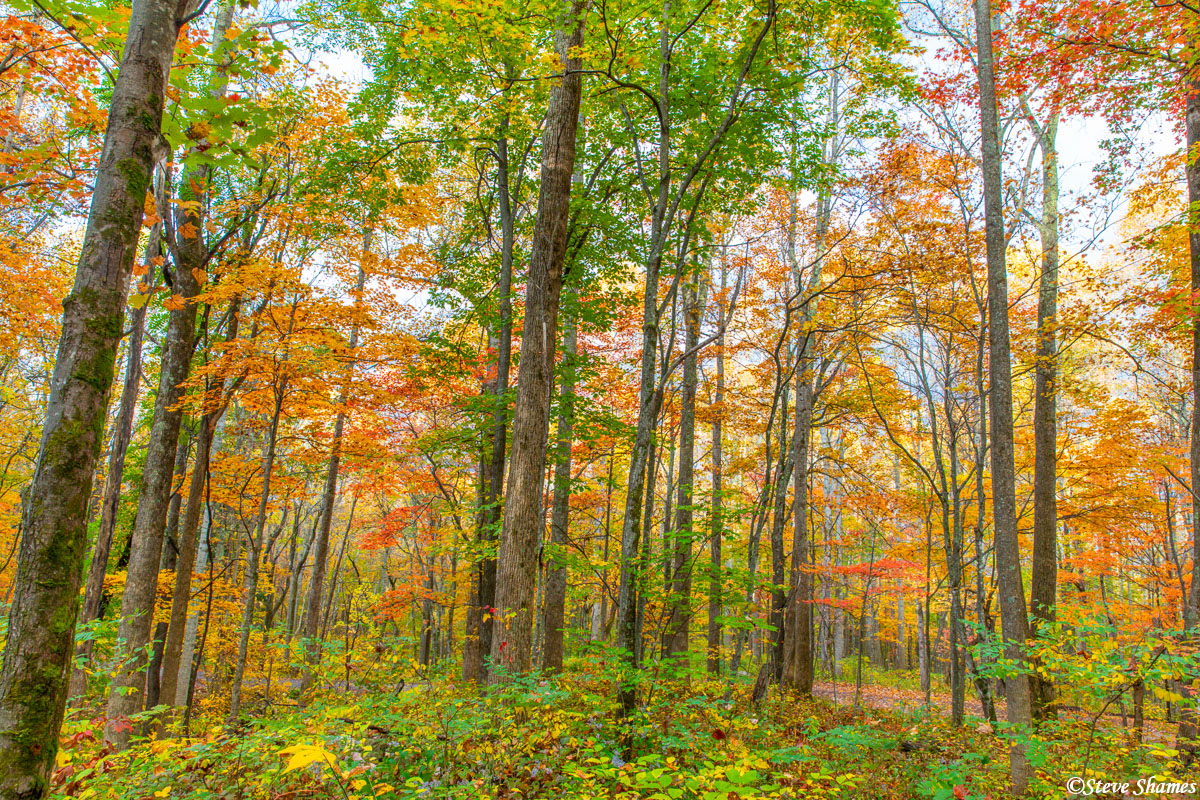 Fall colors in the Smokey mountains. It is very vivid, and almost rivals New England.