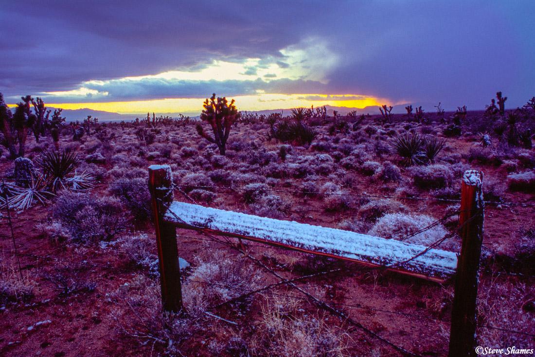 desert scene, mojave national preserve, california, photo