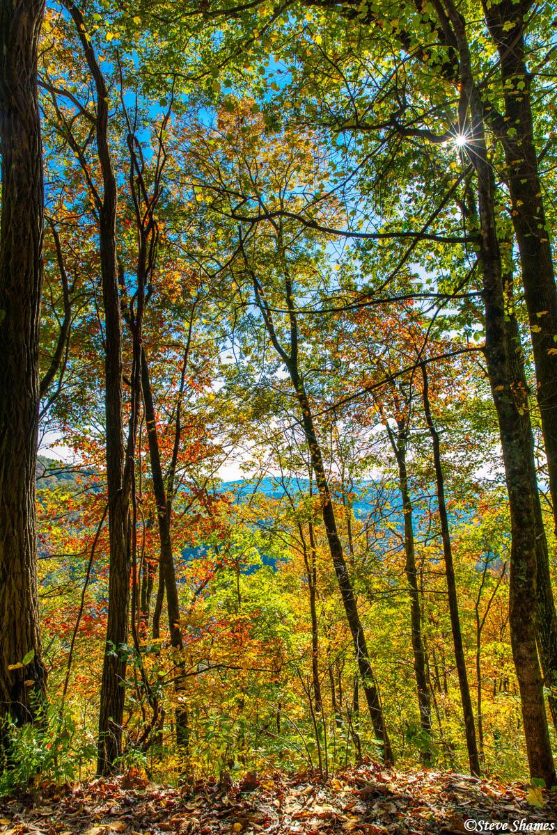 south carolina, fall colors, photo
