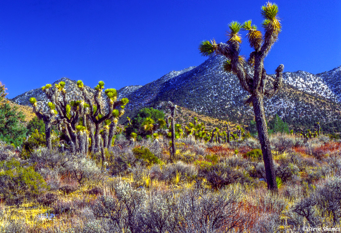 highway 395, southern california, desert cactus, photo