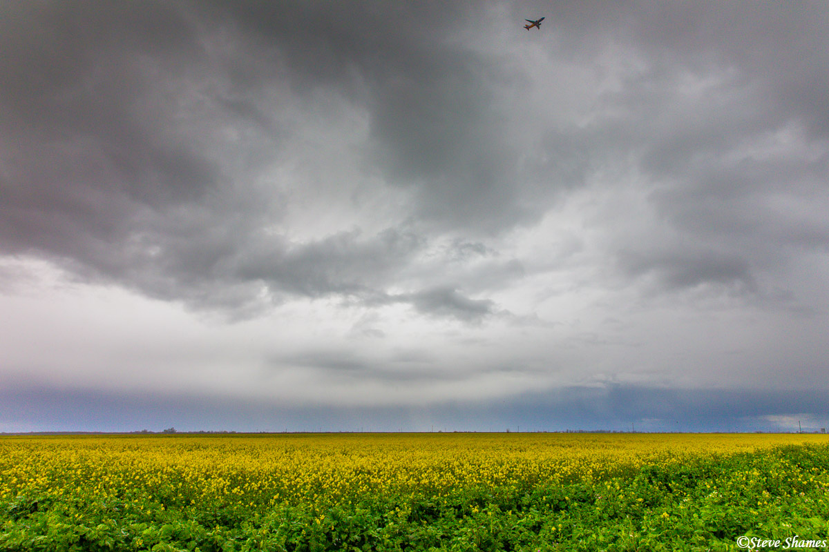 A Southwest jet flies through the dramatic skies over the farmlands full of wild mustard. How do I know its a Southwest jet?...