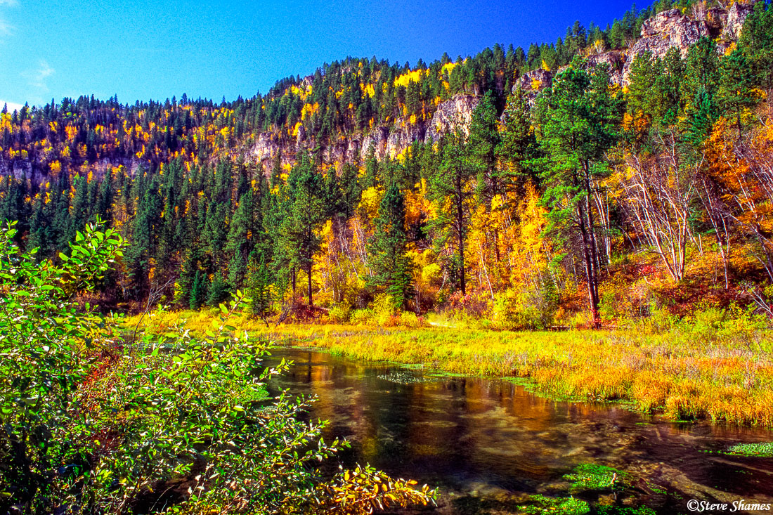 black hills, south dakota, spearfish canyon, fall color, photo