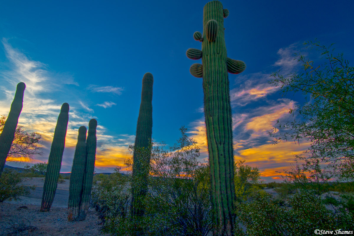 organ pipe, cactus, national monument, arizona, Ajo, sunset, photo