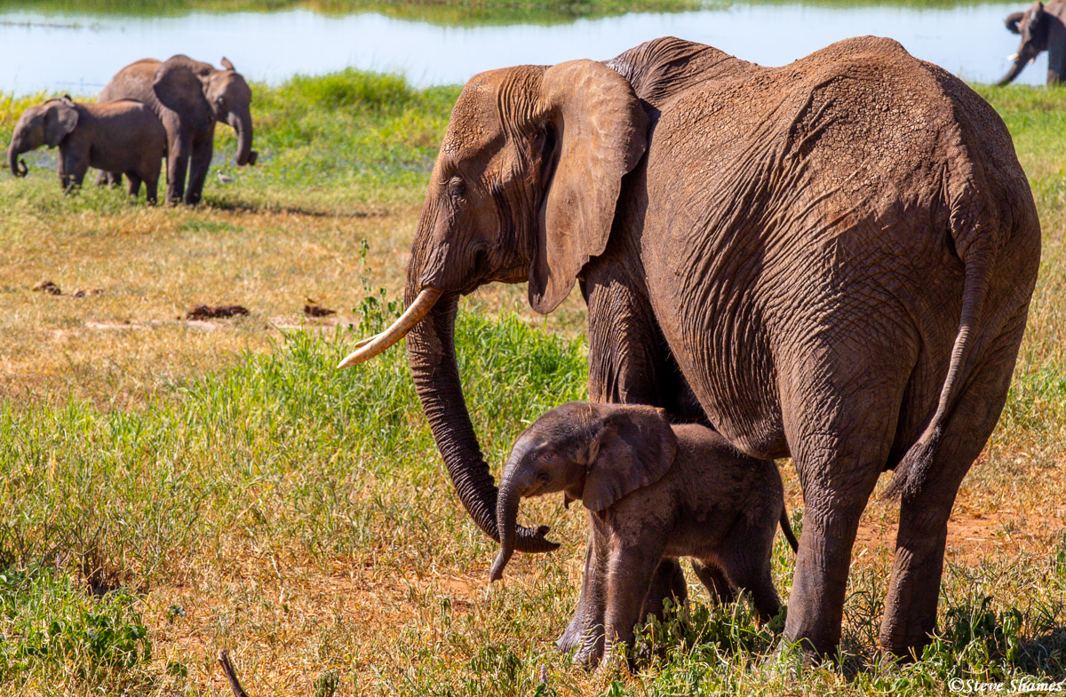 elephant mother and calf, tarangire, tanzania, africa, photo