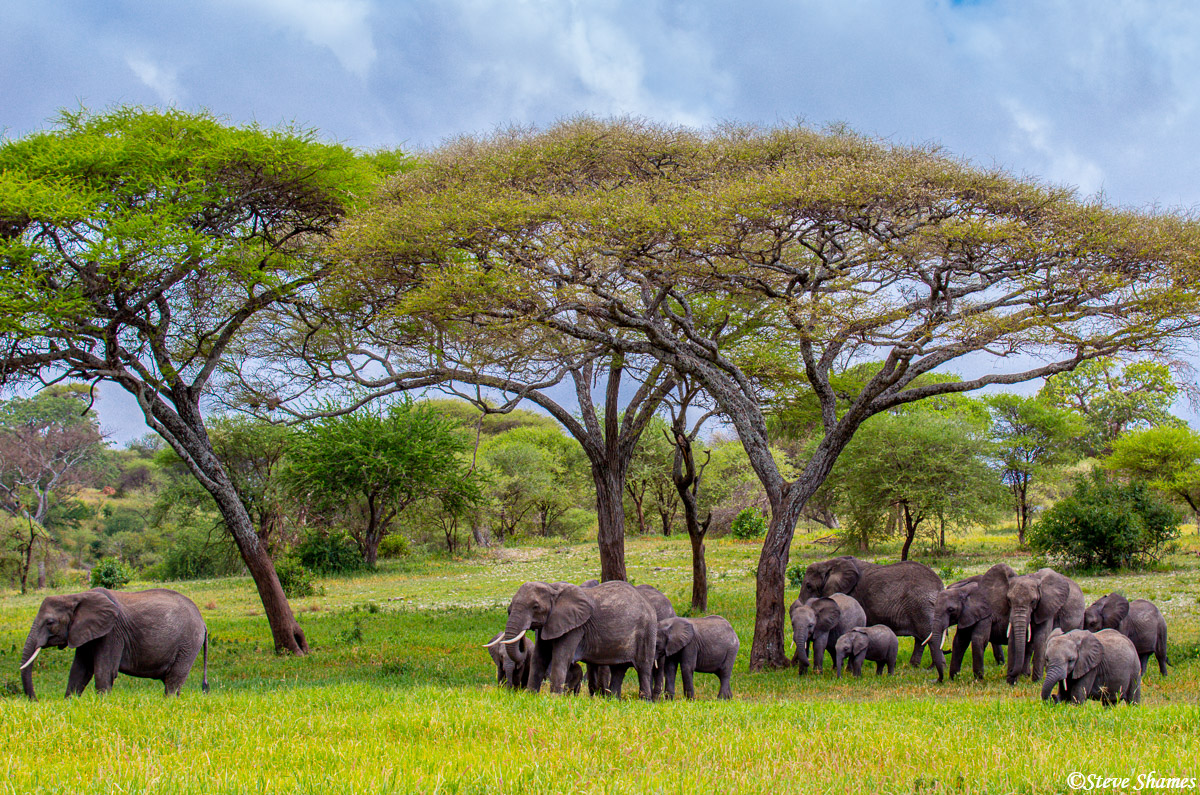 african elephants, tarangire national park, tanzania, photo