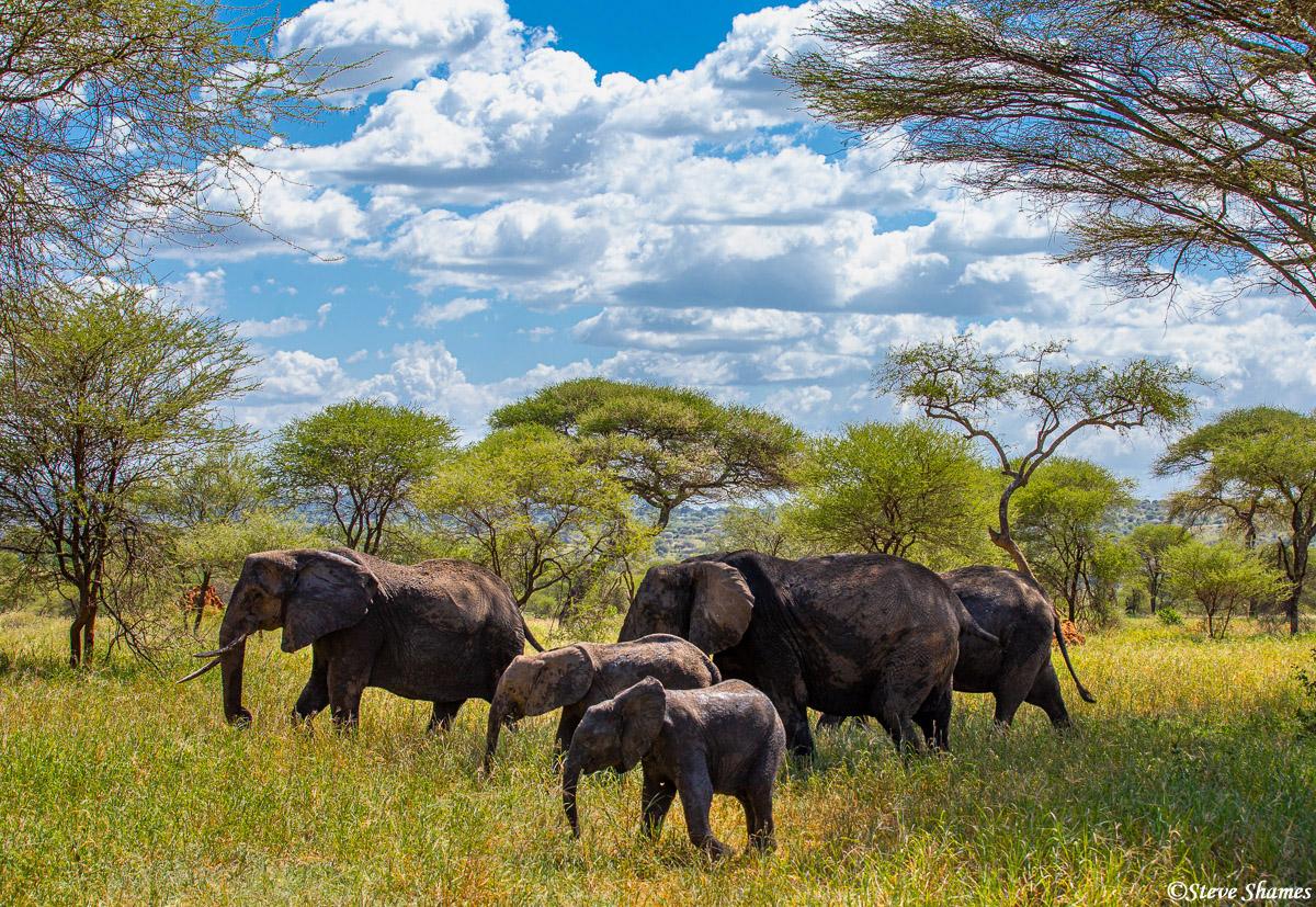 tarangire national park, tanzania, elephant population, photo