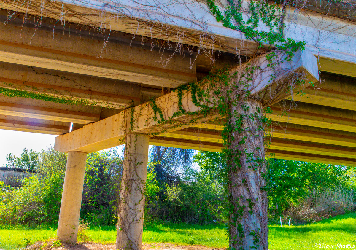 I'm not sure why, but this vine covered overpass really caught my eye. It kind of gave it an unshaven look.