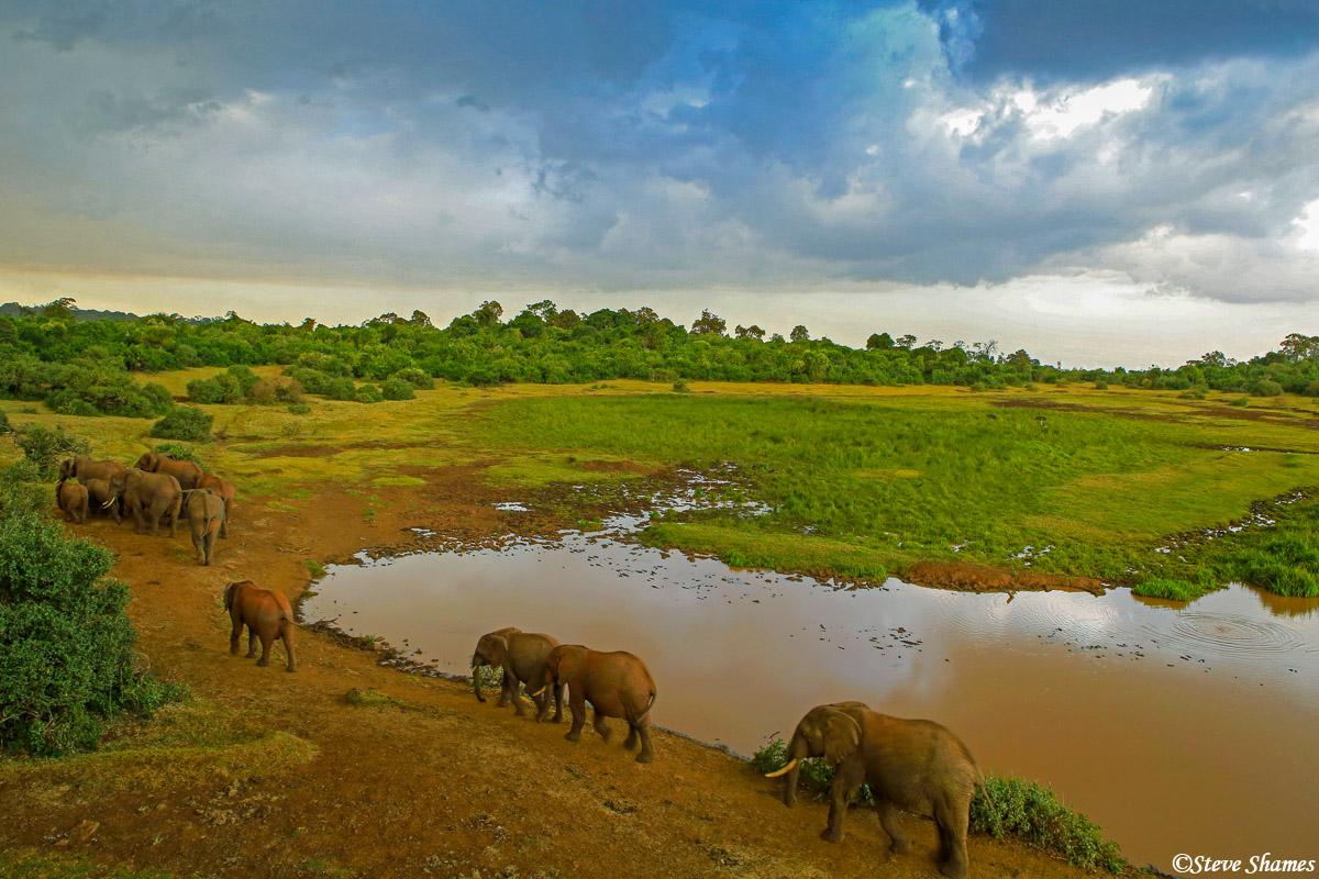 the ark, aberdare national park, kenya, elephants, photo