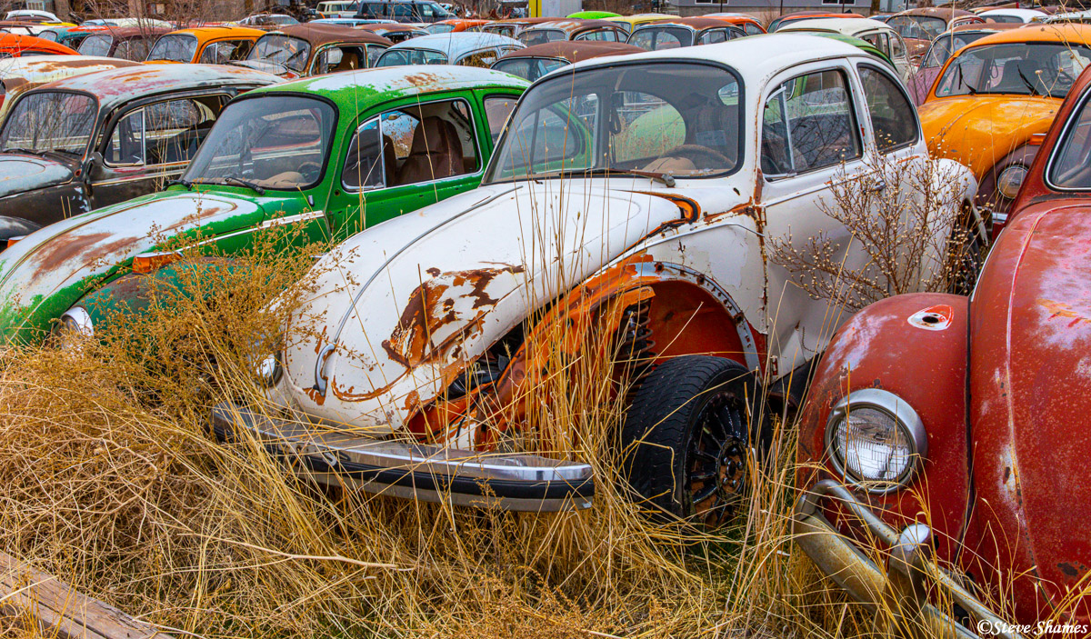 Also known as Tom Tom's foreign car parts, this is quite an extensive Volkswagen junkyard.