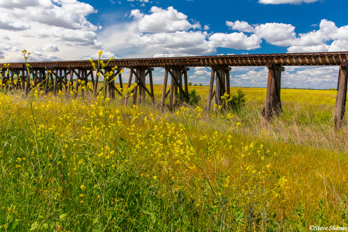 Train trestle surrounded by springtime color.