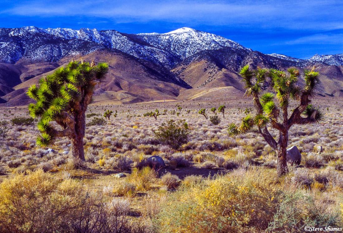 highway 395, southern california, desert scene, photo