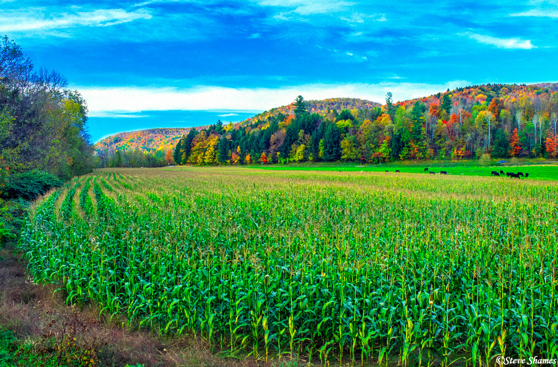 Here is a little slice of scenery in rural Vermont.
