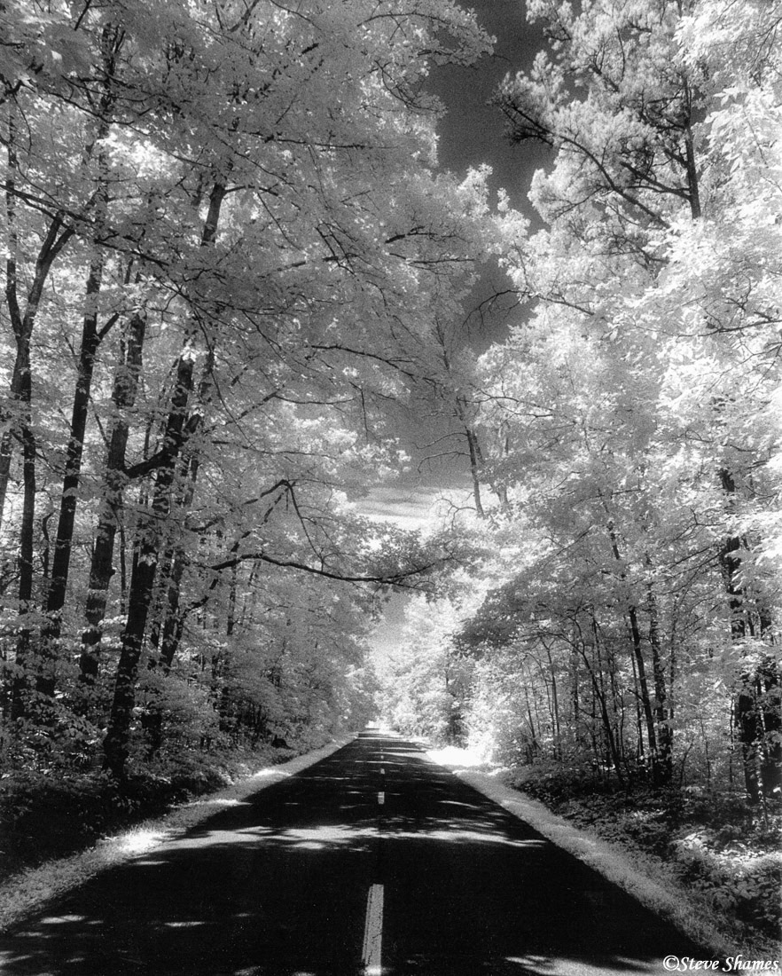 virginia countryside, tree lined road, photo