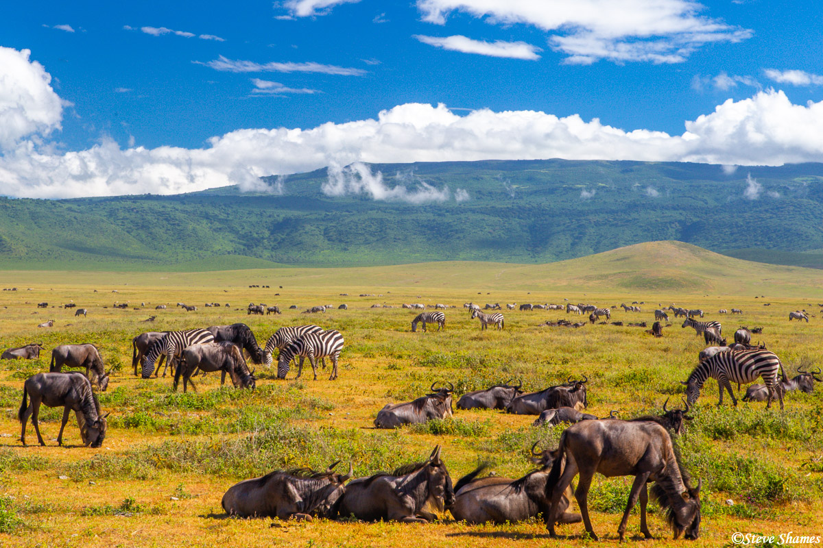 wildebeest, ngorongoro crater, tanzania, photo