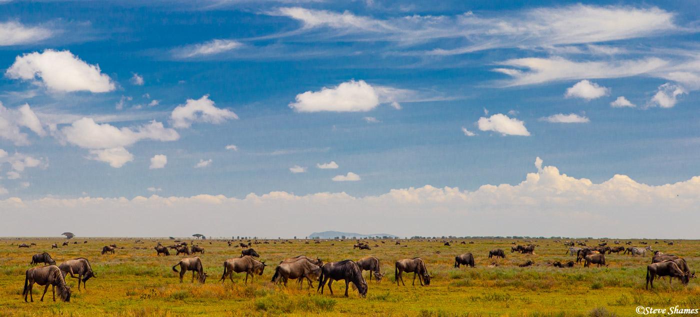 wildebeest, serengeti, tanzania, photo
