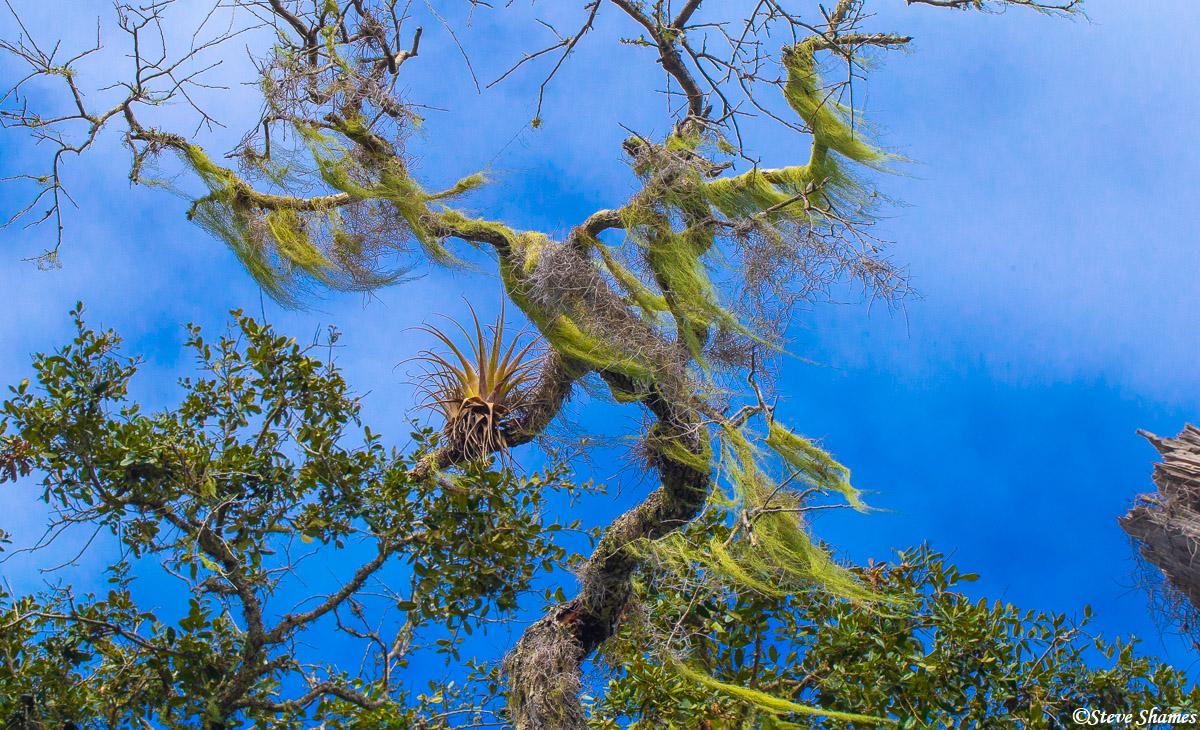 canaveral national seashore, florida, lichen, photo