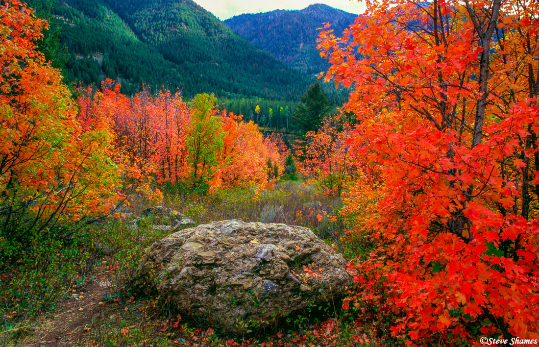 snake river, wyoming fall colors, photo