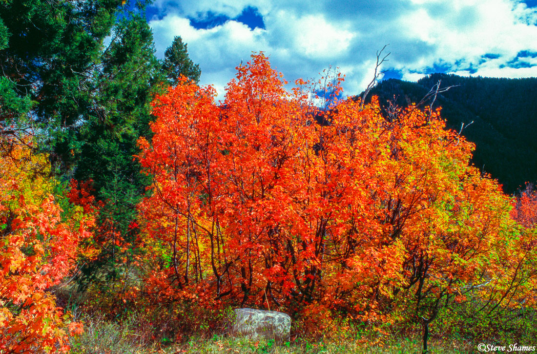 jackson wyoming, fall colors, new england, photo