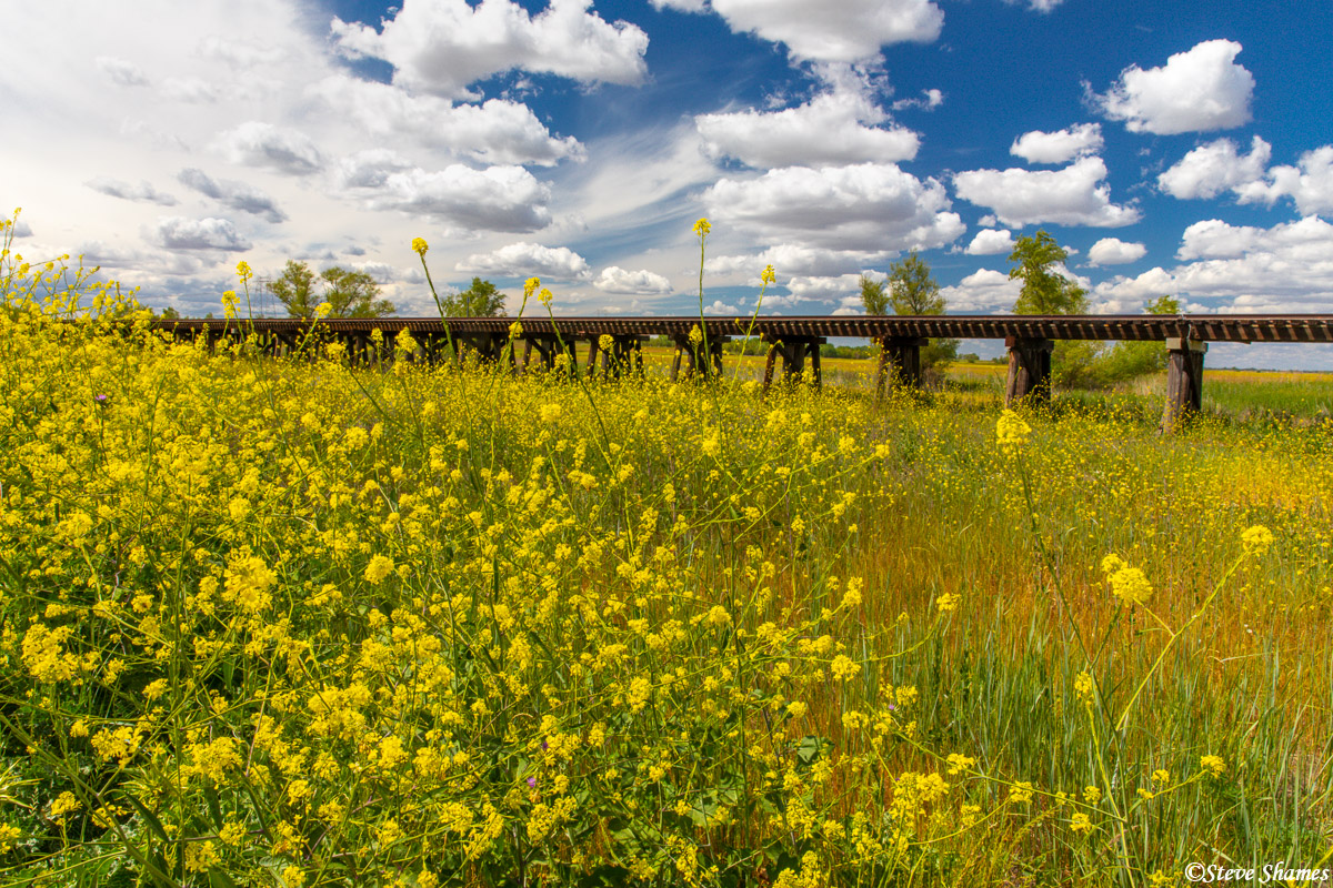 The springtime look really added pizazz to this usually drab train trestle in Yolo County.