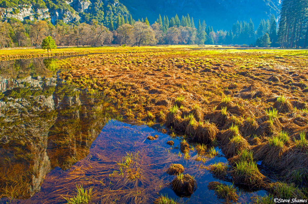 yosemite national park, marsh, morning sun, photo