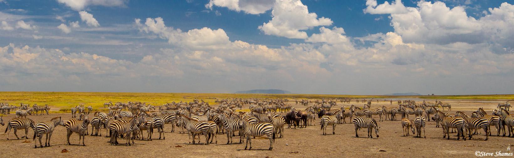 serengeti, national park, tanzania, zebras, waterhole, photo