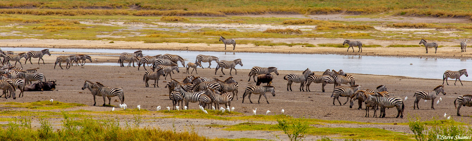 serengeti, national park, tanzania, zebra waterhole, photo