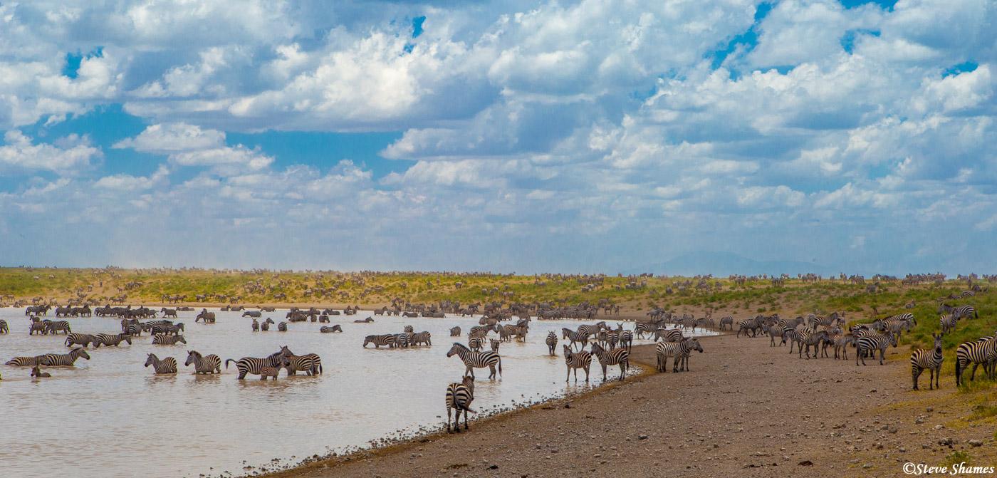 serengeti, national park, tanzania, zebras in waterhole, photo